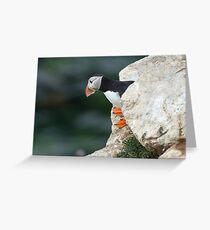 Puffin peeking out, Saltee Islands, Co. Wexford, Ireland Greeting Card