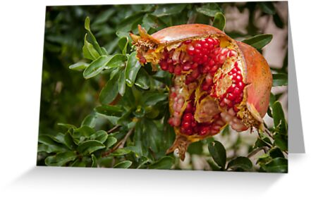 pomegranate by were