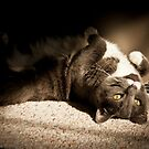 Biddy Catching Rays by Yvonne Roberts