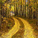 The Golden Road by Linda Eshom