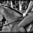 in the saddle by lilli robertson