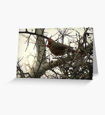 Cardinal (Female) Candy Greeting Card