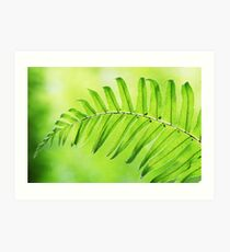 Lime Green Fern Leaf  Art Print