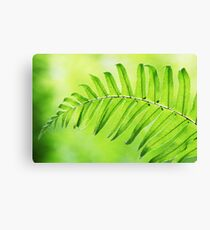 Lime Green Fern Leaf  Canvas Print