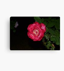 Red and White Rose Canvas Print