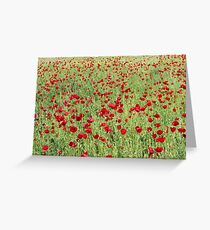 A Pasture Of Red Poppies and Remembrance Greeting Card