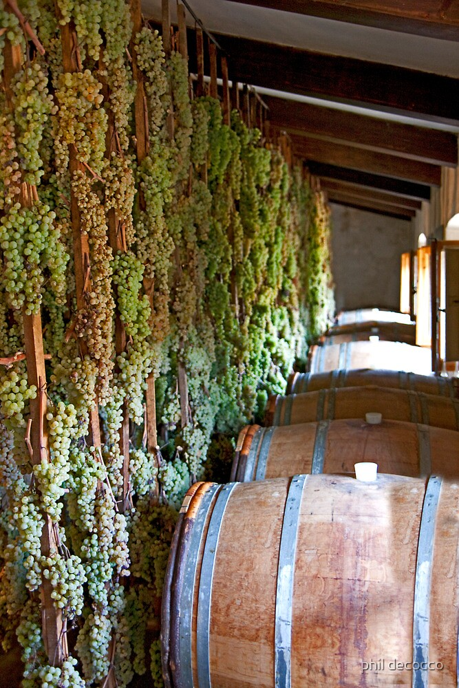Barrels And Grapes by phil decocco