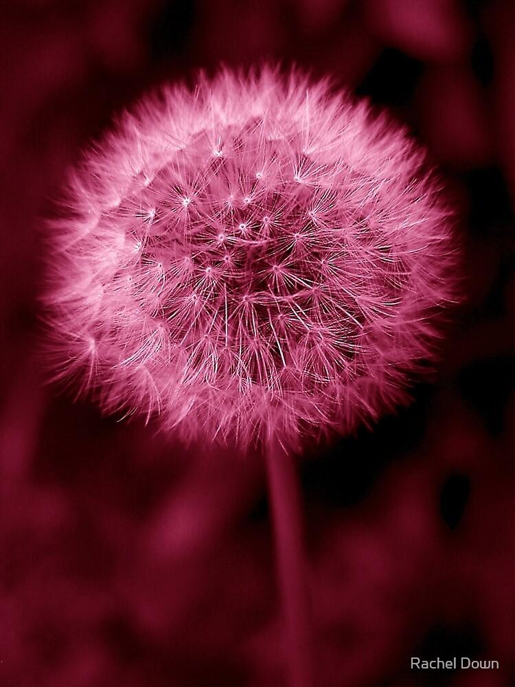 Quot Pink Dandelion Quot By Rachel Down Redbubble