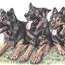 German Shepherd Dogs by Nicole Zeug