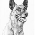 Malinois Dog Portrait by Nicole Zeug