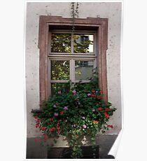 Windowbox Reflections Poster