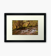 Pencil Pine Creek Framed Print