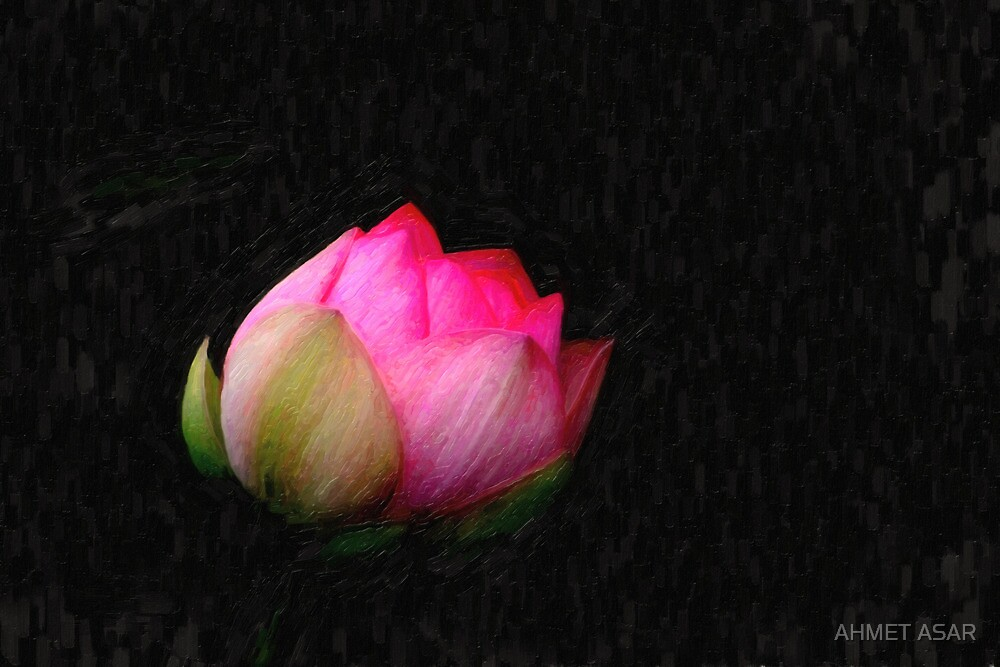 blooming lotus by MotionAge Media