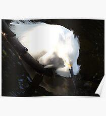 White Heron - Garza Blanca Poster