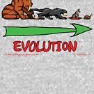 The Evolution of Kitteh by Sozdanee