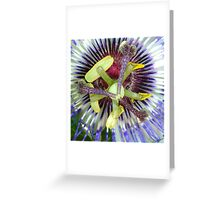Passion Flower Close Up Greeting Card