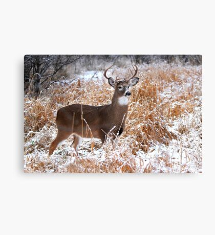 A Regal Stance - White-tailed deer Buck Canvas Print