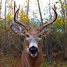 Wide-Angled Buck - White-tailed deer by Jim Cumming