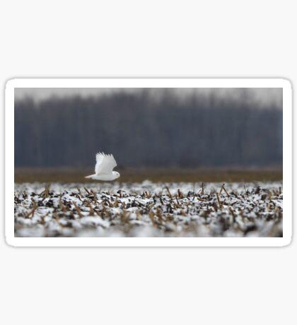 Ghost - Snowy Owl Sticker