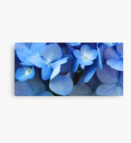 -Endless Summer (Blue Hydrangea) Canvas Print