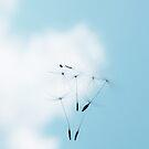 Falling from Heaven by Ingrid Beddoes
