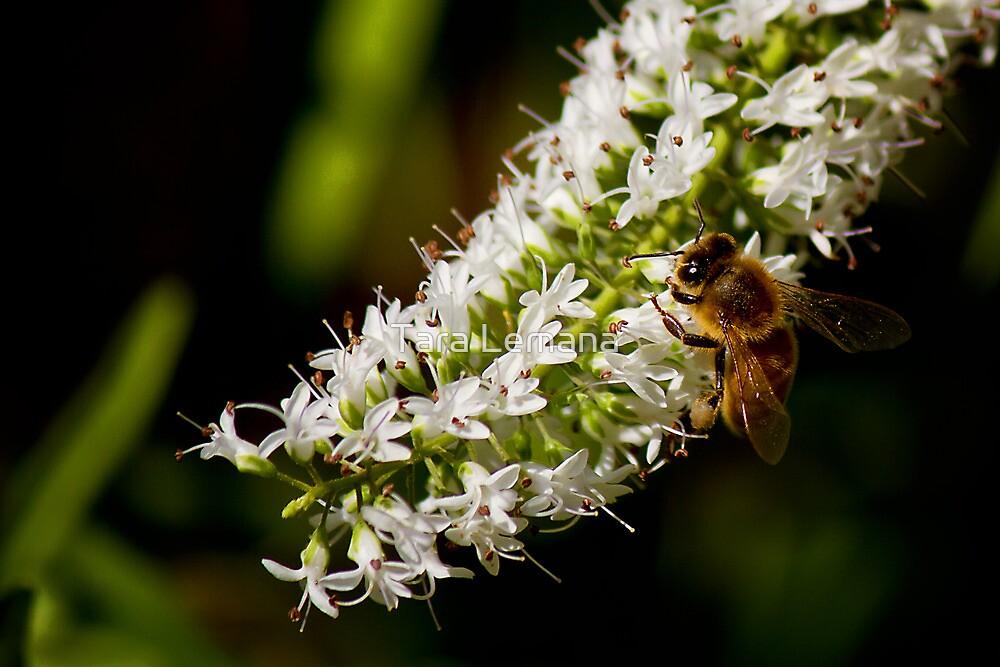 Honey Factory by Tara Lemana