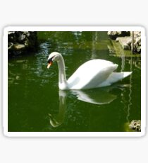 Green Water - Chiara Conte Sticker