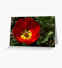 Bright and Red Sunny Tulip Greeting Card