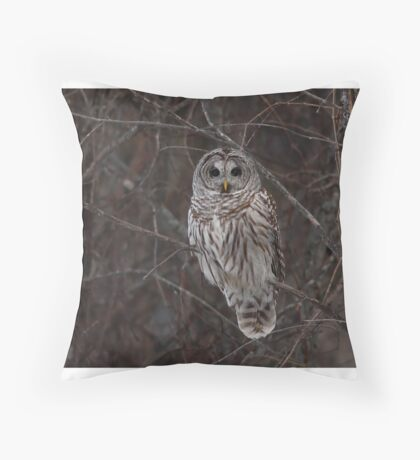 Barred Owl - Kanata, Ont Throw Pillow
