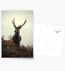 Stag in a blizzard Postcards