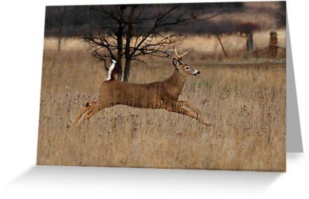 Grass Hopper - White-tailed Deer by Jim Cumming