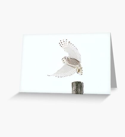 Startled - Snowy Owl Greeting Card