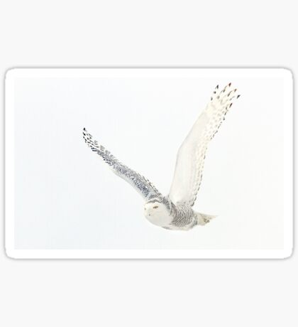 Afternoon Flight - Snowy Owl Sticker