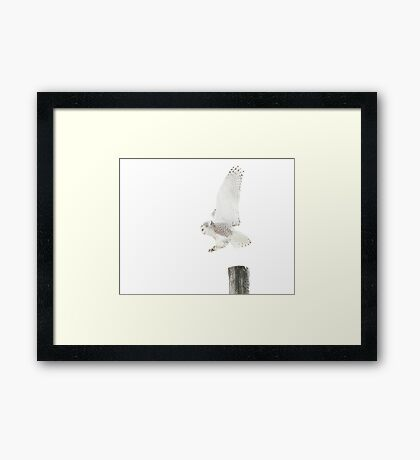 Startled 2 - Snowy Owl Framed Print