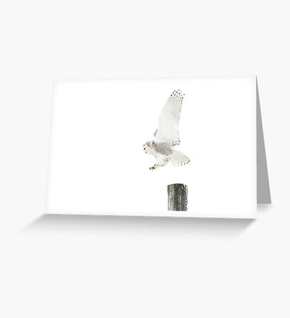 Startled 2 - Snowy Owl Greeting Card