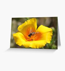 Insect on Flower Greeting Card