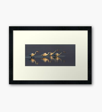 Fishing - Great Egrets Framed Print