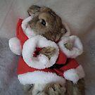 xmas bunny  by darren  shaw