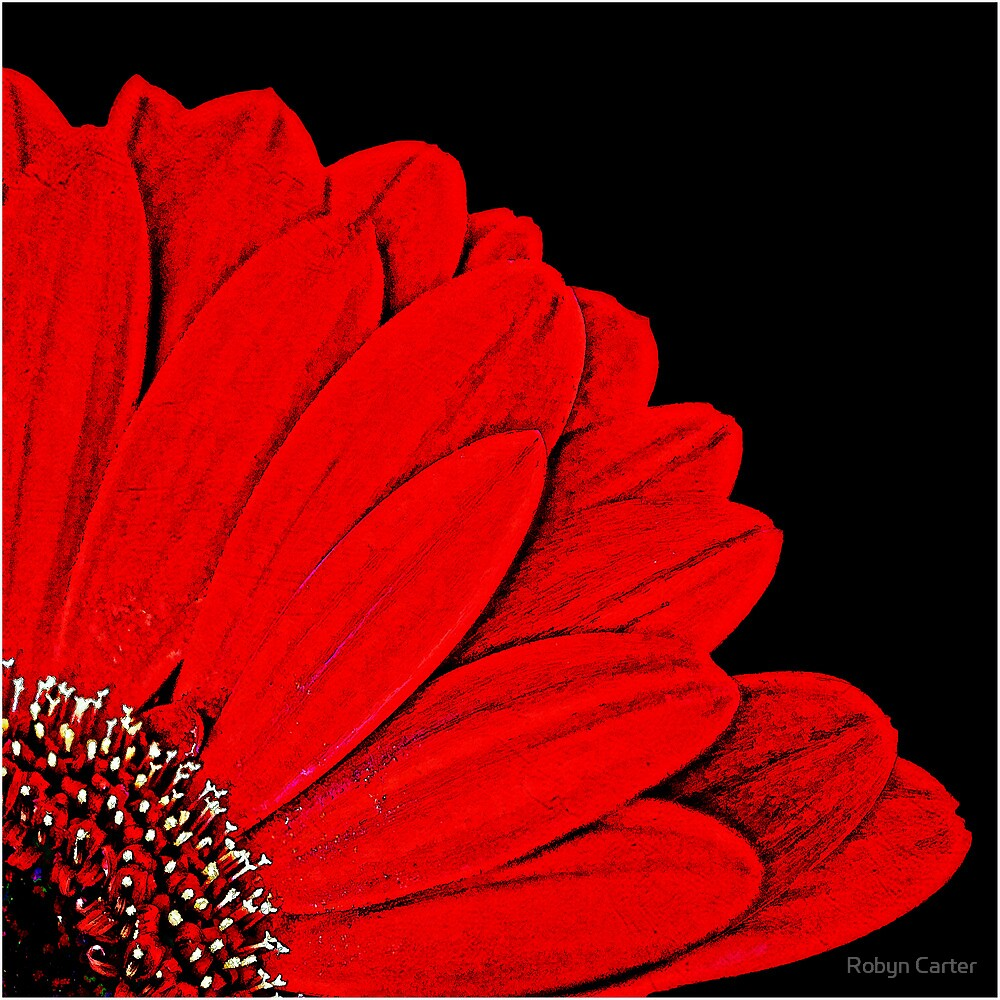 Red Gerbera by Robyn Carter