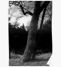 Dramatic Tree Poster