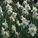 Springtime... by Kate Farkas