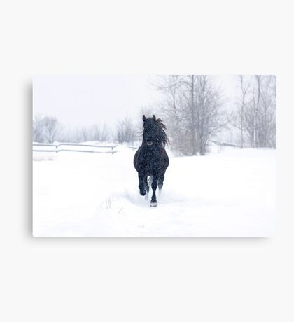 Dashing through the snow - Horse Metal Print