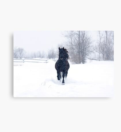 Dashing through the snow - Horse Canvas Print