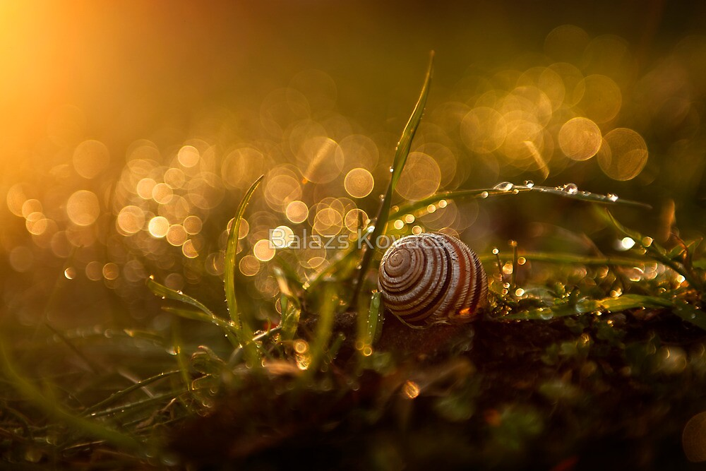Little snail in the grass by Balazs Kovacs