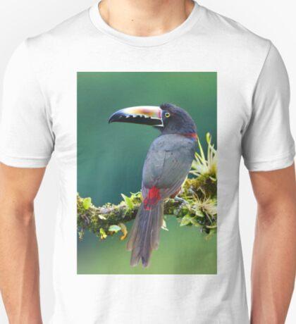 Collared Aracari - Costa Rica T-Shirt