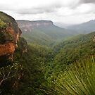 Jamison Valley, Blue Mountains by Dilshara Hill