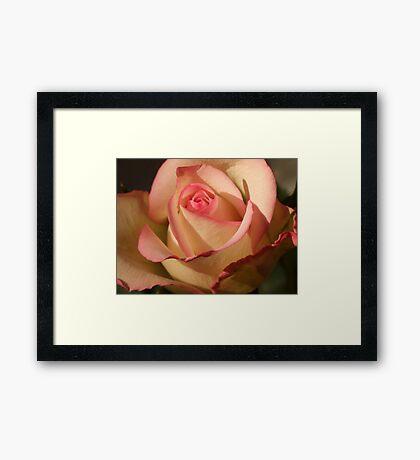 Seduction Rose Framed Print