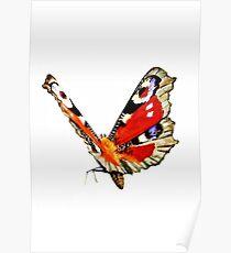 European Peacock (Inachis io) Poster