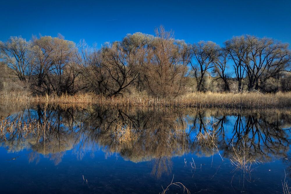 Marsh Lines by Bob Larson