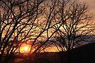 Sundown In The Sticks by NatureGreeting Cards ©ccwri
